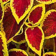 Plant Design Poster