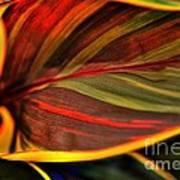 Plant Leaf Poster