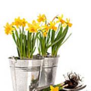 Planting Bulbs Poster by Amanda Elwell