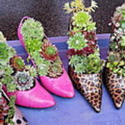 Plants In Pumps Poster