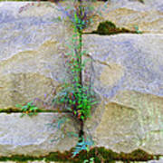 Plants In The Brick Wall Poster