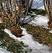 Plantsgrasscomp 2009 Poster