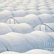 Plastic Sheet Greenhouses To Grow Veggies Poster