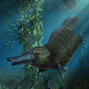 Platypus Poster