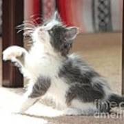 Playing Kitten Poster