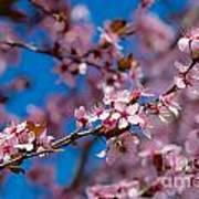 Plum Flowers And Honey Bee Poster