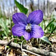 Plumb Wildflowers Poster