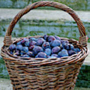 Plums In A Basket, Southern Bohemia Poster