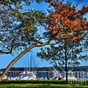 Plymouth Harbor In Autumn Poster