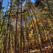 Pocono Trees Poster