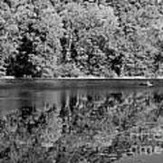 Poinsett State Park In Black And White Poster
