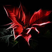 Poinsettia - Christmas Flower Poster by Gynt
