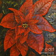 Poinsettia/ Christmass Flower Poster by Elena  Constantinescu