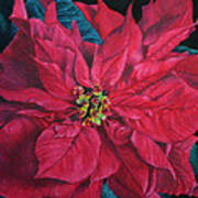 Poinsettia II Painting Poster