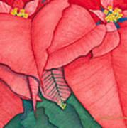 Poinsettia Poster