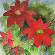 Poinsettias Holiday Card Poster
