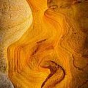 Point Lobos Abstract 6 Poster