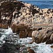 Point Lobos Coast 2 Poster
