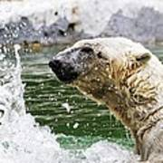 Polar Splash Poster