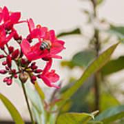 Polen Gathering Bee Poster