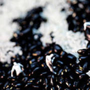 Police Investigating Question Mark On Bean Field Poster
