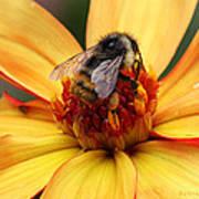 Pollinator  Poster by Melisa Meyers