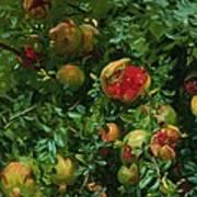 Pomegranates    Majorca Poster