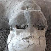 Pompeii Ash Skeleton Poster by Gregory Dyer