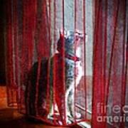 Poncho Watching It Rain Poster