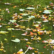 Pond 2 Poster