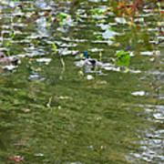 Pond 4 Poster