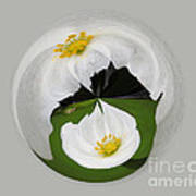 Pond Flower Orb Poster
