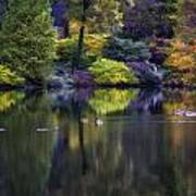 Pond In The Park Oil Paint  2721gop   Poster