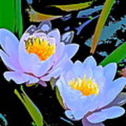 Pond Lily 17 Poster