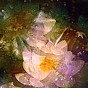 Pond Lily 23 Poster