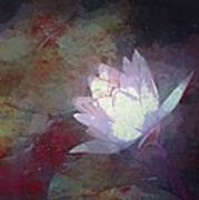 Pond Lily 32 Poster