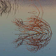 Pond Weed Reflections Poster