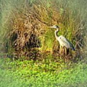 Pond Wildlife Poster