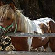Pony Horse Poster