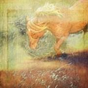 Pony In The Grasses Poster
