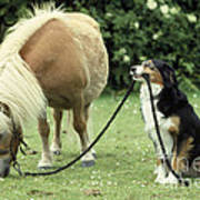 Pony With Lead Rope Held By Sitting Dog Poster