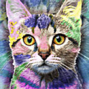 Pop Cat Poster