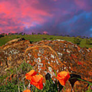 Poppies And Clouds Poster