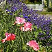 Poppies And Lavender Poster