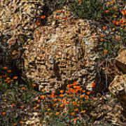 Poppies And  Rocks Poster