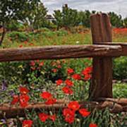 Poppies At The Farm Poster