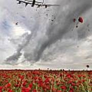 Poppies Dropped  Poster