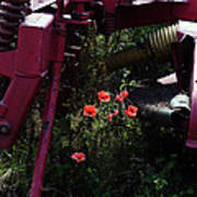 Poppies Growing Amongst Farm Machinery In A Farmyard Near Pocklington Yorkshire Wolds East Yorkshire Poster
