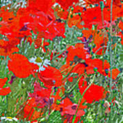 Poppies II Poster