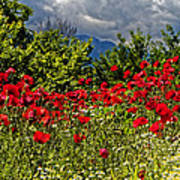 Poppies In Remembrance Poster